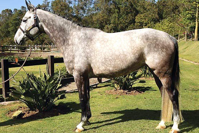 Caballos en venta - Generación 2011 - Xenal - RanchoSantaRosa.com.mx/criadero