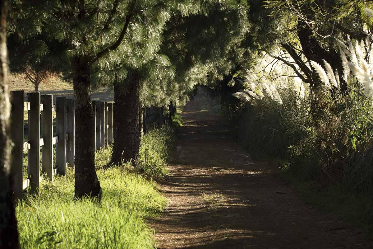 Rancho Santa Rosa - CreadoresWeb.mx